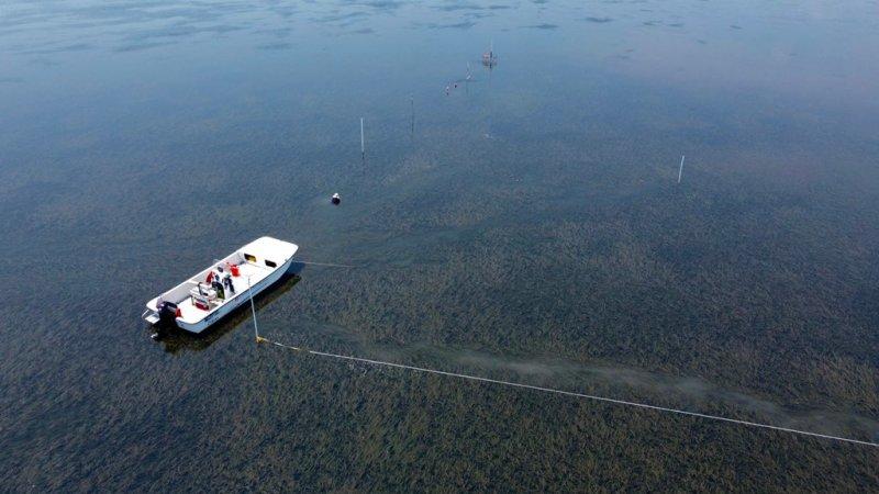 , Restauran con éxito más de 3mil hectáreas de hierba marina para combatir el cambio climático