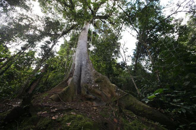 Hoy se celebra el Día del Árbol y es necesario saber cuál es la importancia de sembrar, reforestar y conservar los árboles en el territorio peruano y en el planeta. ANDINA/archivo