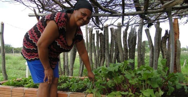 Portal Capoeira Mulheres de áreas rurais terão projeto de inclusão socioprodutiva Cultura e Cidadania