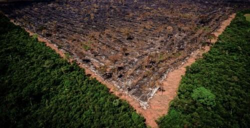 Nota de repúdio de sociedades científicas brasileiras ao desmantelamento das políticas ambientais no Brasil