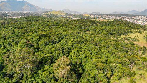 Prefeitura desiste oficialmente de construir autódromo na Floresta do Camboatá