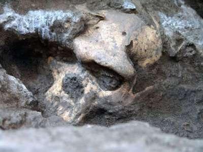 cranio-evolucao-humana-ap-2-repre