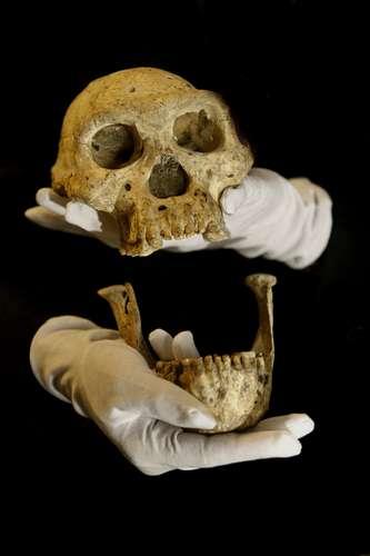 cranio-evolucao-humana-ap-4