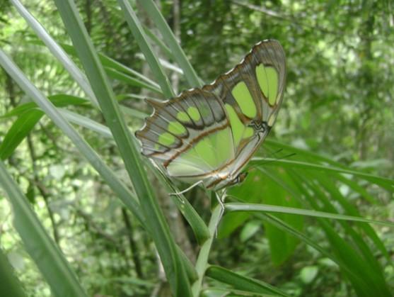 Relato 07 Abrindo Portais para a Humanidade A borboleta Verde