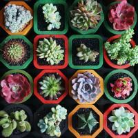 Plantas Suculentas, La Nueva Tendencia Que Te Acerca a La Naturaleza