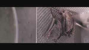 Polêmica sobre origem da Covid esquenta após imagens de morcegos no que seria laboratório de Wuhan