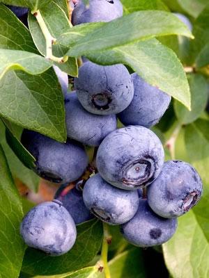 frutos-ajudam-a-garantir-saude-do-cerebro-em-idosos