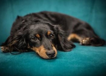 Veterinária alerta para os cuidados com os pets nas festas de fim de ano