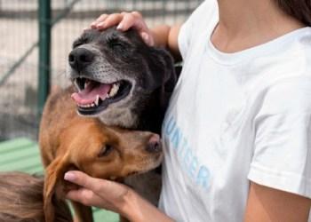 FAS lança edital para doação de ração a protetores e cuidadores de animais