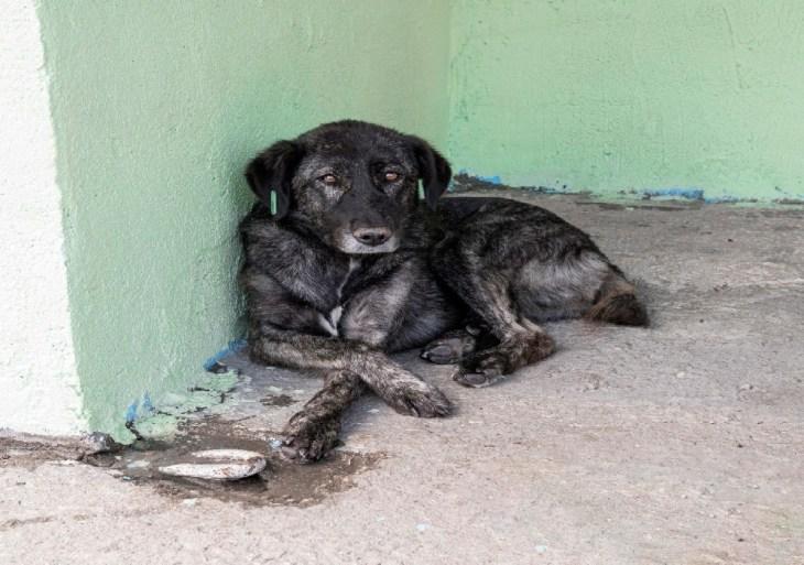 Projeto cria políticas de bem-estar animal e fauna doméstica em Manaus e áreas protegidas