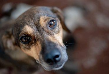 FAS e Sema tem cadastramento aberto para doação de ração a protetores e cuidadores de animais