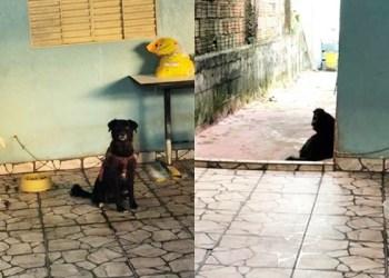 Vizinhos denunciam abandono de cão em residência no Nova Cidade