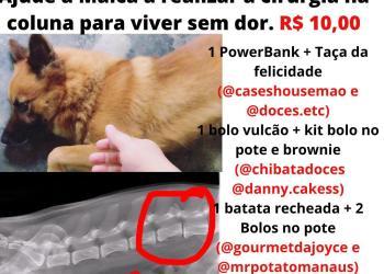 Dona faz rifa para custear cirurgia de cadela atropelada