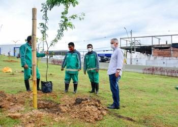 Arborização do complexo viário Ministro Roberto Campo é finalizada