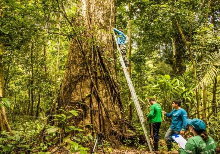 Em nome da preservação, Terramazonia Superplants firma parceria com o Instituto Mamirauá