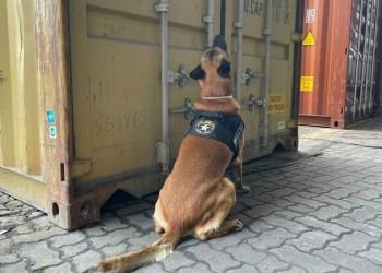 Cão ajuda a localizar 350 kg de cocaína que iriam para a Europa