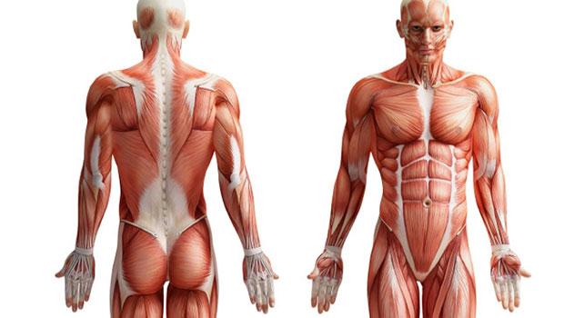 É Preciso Isolar os Músculos? Saiba a Verdade