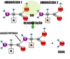 Aminoácidos: O que São, Classificação e Benefícios