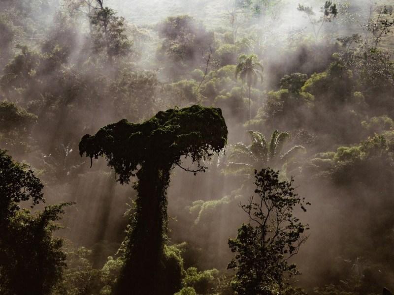 Sérgio Vale traz as árvores gigantes da floresta