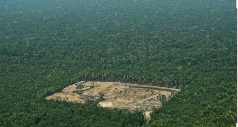 MPF cobra do Incra cumprimento de termo de compromisso para redução do desmatamento na Amazônia