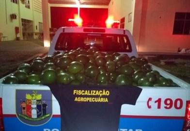 Oito toneladas de abacate ilegal vindas da Venezuela são apreendidas em barreira
