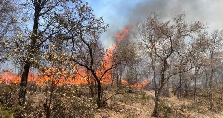 Arrasa incendio con 200 hectáreas