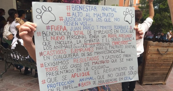 Activistas marcharon para exigir justicia a 'oso'
