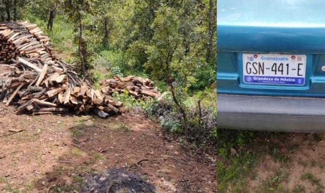 Caen más talamontes en la sierra, cortaron 100 árboles