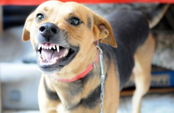 Em Nampula, principal cidade do norte de Moçambique, pelo menos, 40 pessoas foram mordidas por um único cão, anteontem, 17.