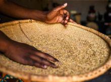A Polícia Judiciária (PJ) da Guiné-Bissau elevou para mais de 170 toneladas, a quantidade de arroz recuperado, supostamente desviado por pessoas ligadaa ao poder.