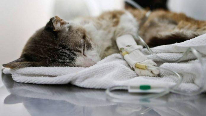 hospital veterinário público amazonas
