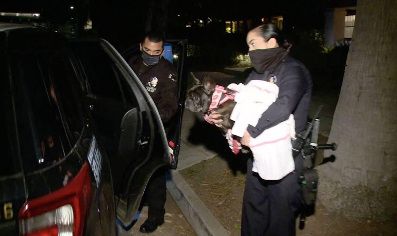 Lady Gaga tem cães sequestrados e cuidador baleado em Los Angeles