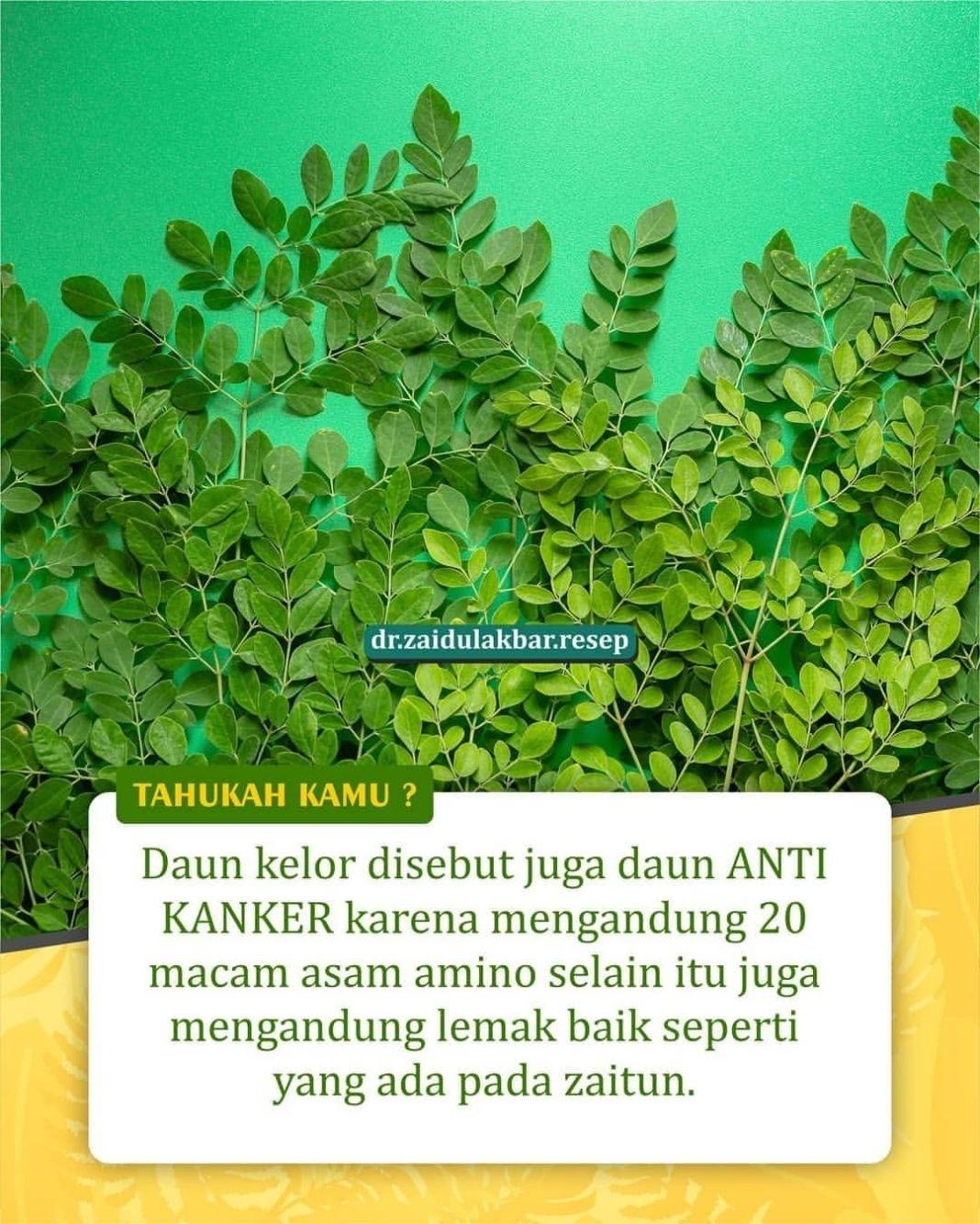 Info sehat, Manfaat daun kelor untuk kanker Penelitian mengenai manfaat daun kelor untuk kanker sudah cuku…