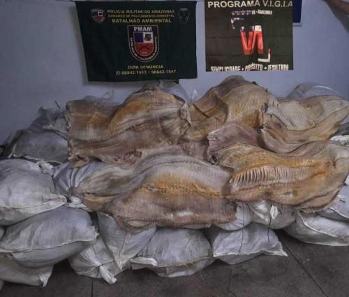 Polícia Militar apreende 2,7 toneladas de pescado e 115 metros cúbicos de madeira