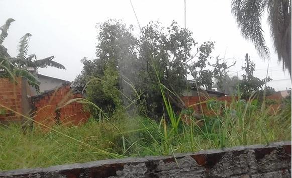 Árvore cai sobre casa em Jacarezinho