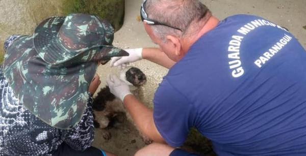 Cão abandonado em ilha, que estava sendo comido vivo por urubus, é resgatado