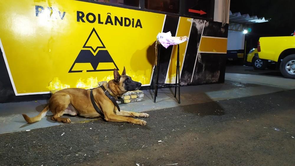 Cão farejador encontra droga escondida em tábuas de passar roupa dentro de ônibus