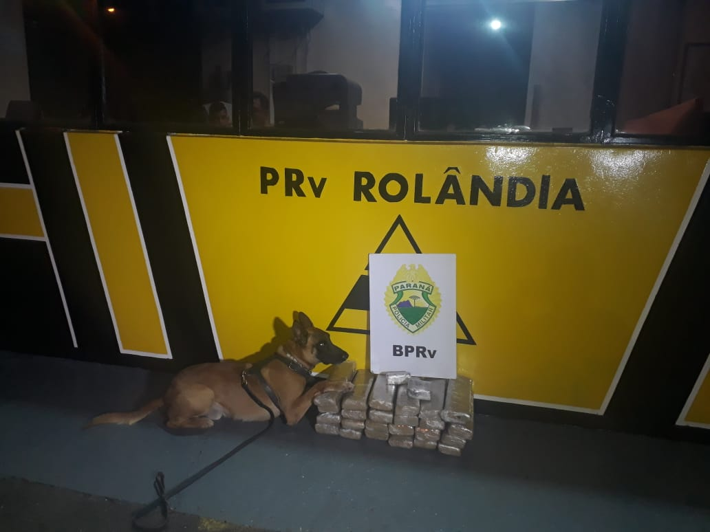 Cão Hórus da polícia rodoviária encontra mais de 30 kg de maconha em ônibus
