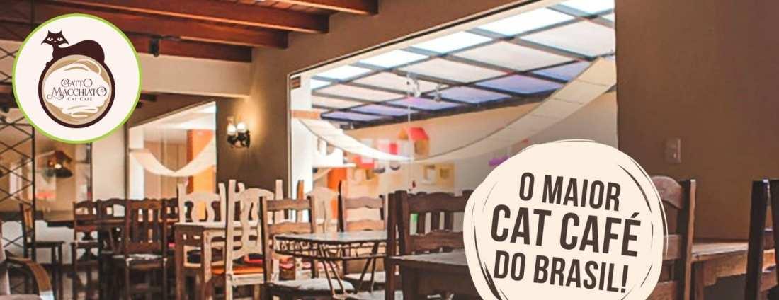Gatto Macchiato Cat Café