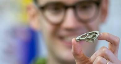 Como cientistas descobriram qual foi a primeira ave que já existiu