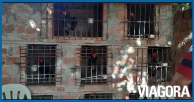 Polícia Ambiental apreende 18 galos usados em rinha na zona Sul