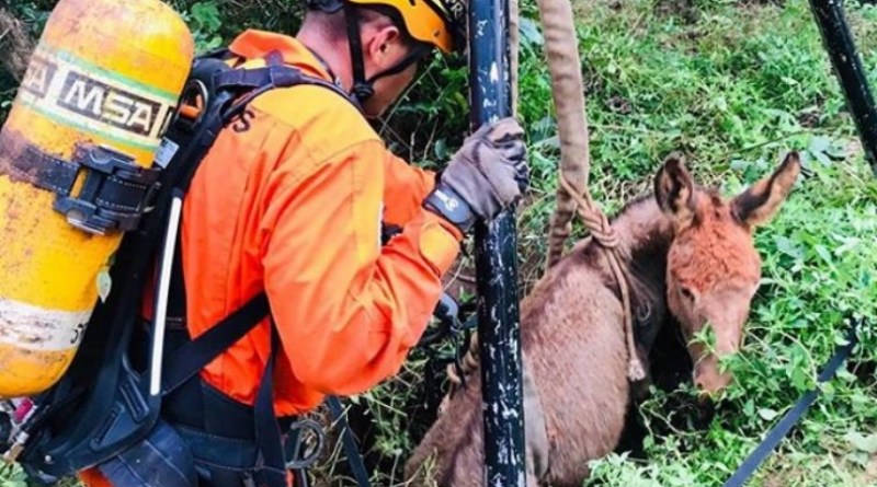 Após quatro dias, jumentos que caíram em poço são resgatados em São Luís