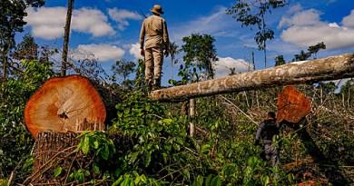 Desmatamento na Amazônia cresce e piora imagem do Brasil no mercado internacional