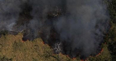 Desmatamento na Amazônia atinge nível mais alto nos últimos dez anos