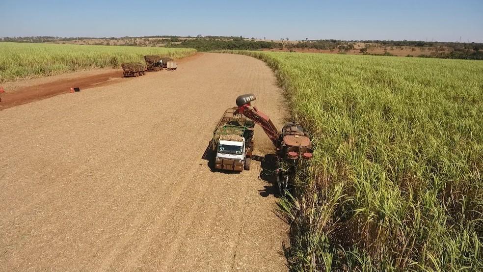 Produção cana de açúcar Triângulo Mineiro — Foto: TV Integração/Reprodução