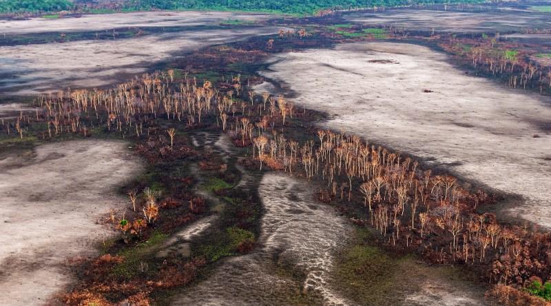Desmatamento no Brasil derrubou 24 árvores por segundo ano passado