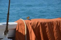 Petit oiseau à bord du bateau