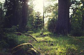 Chez les korrigans, dans la forêt de Brocéliande