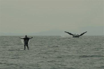 Session SUP avec les baleines