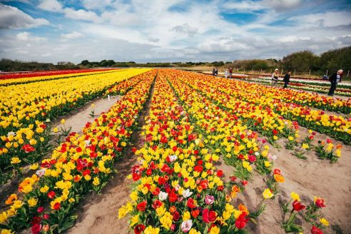 À chaque printemps son spectacle !